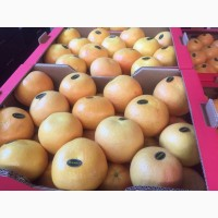 Продаем грейпфрут