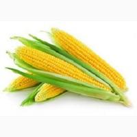 Семена кукурузы Адэвей, LG 31172