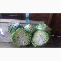 Продаю капуста белокочанная свежая оптом