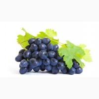Куплю виноград