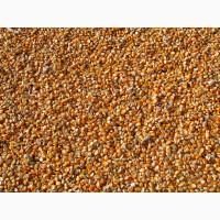 Продаю фуражную кукурузу от производителя. 13800 руб/тонна