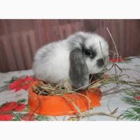 Декоративный кролик, лучший подарок вашему ребёнку