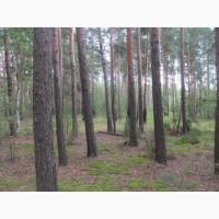 Участок 15 соток под дом в Дубровичах.Озеро и лес