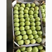 Яблоки/Cвежие/Оптом/Сады Адыгеи