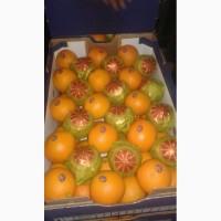 Апельсины оптом из Египта
