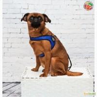 Купить шлейку для собаки в интернет магазине