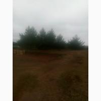 Участок под дом в Алеканово 10 соток с соснами у леса
