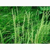 ООО НПП «Зарайские семена» продаёт семена райграса однолетнего