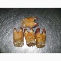 Ноги говяжьи замороженные(путовый сустав)