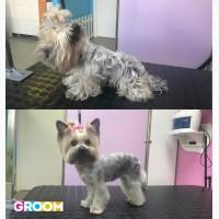 Предлагаем стрижку собак и кошек в салоне Groom