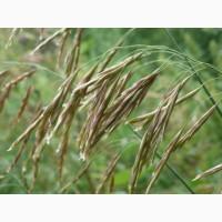 ООО НПП «Зарайские семена» реализует семена костреца безостого оптом и в розницу