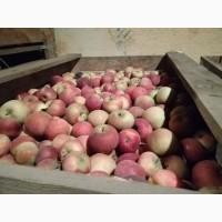 Продам яблоки. 55+. Урожай 2018. Сорта разные