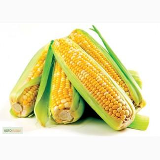 Гибриды семена кукурузы (Пионер, Pioneer)
