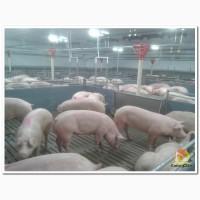 Строительство и рекострукция свинокоплексов в Самарской области
