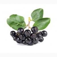 Куплю рябину в гроздях красную/чёрную, оптом от 1 тонны