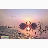 Любовная и семейная магия, консультирование опытного таролога, ответы на вопросы