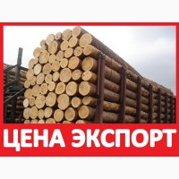 ᐉ 1 КУБ СОСНА КРУГЛЯК Кедр Лес Цена! Древесина Лес Оптом Купить на Экспорт в Китай