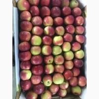 Яблоки/Свежие/Калиброванные