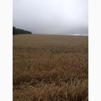 Земельный участок 430 Га (пашня)