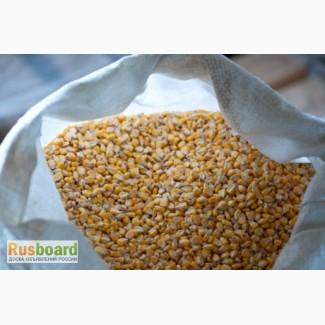 Кукуруза продовольственная