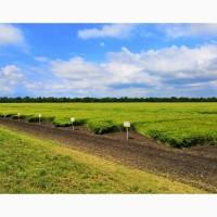Продам семена озимой пшеницы, ячменя