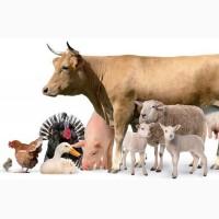 Ферментационная подстилка для животных BioBak