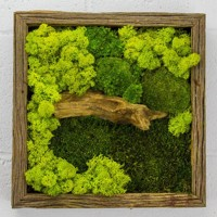 Стабилизированный мох. Озеленение. Оформление интерьеров стабилизированным мхом