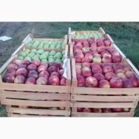 Яблоко оптом из Армений