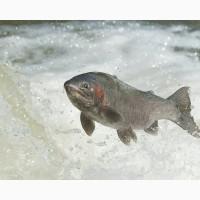 Рыба и Морепродукция, салаты с рыбой и МП, полуфабрикаты