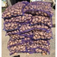 Продаю картофель 5+ напрямую от поставщика оптом от 1 тонны