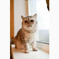 Кошка Микаэла в добрые руки