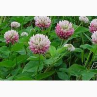 ООО НПП «Зарайские семена» продает семена клевера гибридного (розового) оптом и в розницу