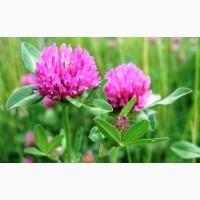 ООО НПП «Зарайские семена» продает семена клевера лугового оптом и в розницу