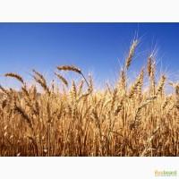 Зерно оптом