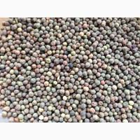 ООО НПП «Зарайские семена» закупает семена: горох полевой пелюшка от 20 тонн