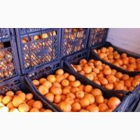 Продам мандарин абхазский