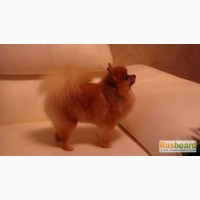 Стрижка собак и кошек без наркоза