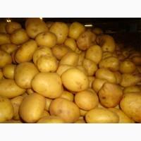 Купим картофель мытый в России г. Брянске и других стран