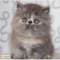 Персидская кошечка Барби