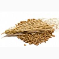 ООО НПП «Зарайские семена» закупает семена: ячмень яровой от 60 тонн