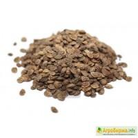 ООО НПП «Зарайские семена» продает семена эспарцета оптом и в розницу