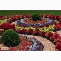 Посадка кустарников, однолетних и многолетних цветов, озеленение офисов