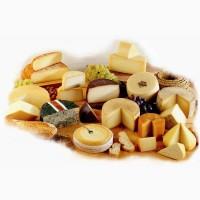 Поставка сыров оптом