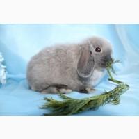 Питомник декоративных кроликов Красная Жемчужина