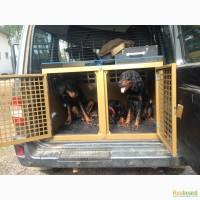 Клетки для перевозки собак в автомобиле