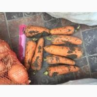 Продаю морковь оптом от 20тонн
