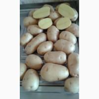 Продаем картофель, подходит для мойки