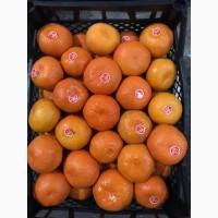 Продам мандарины оптом абхазские супер качество с доставкой по всей рф