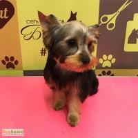 Стрижка щенка, первый грумер, парикмахерская для собак. Тримминг в Москве