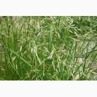 ООО НПП «Зарайские семена» закупает семена овсяницы луговой от 5 тонн